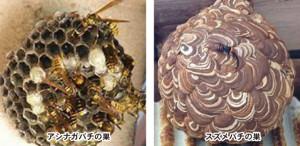 ハチの種類